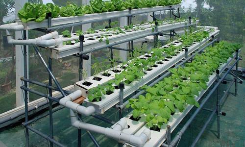 Самая лучшая технология посадки и размножения смородины и смородины с применением гидрогеля ECOFLOC